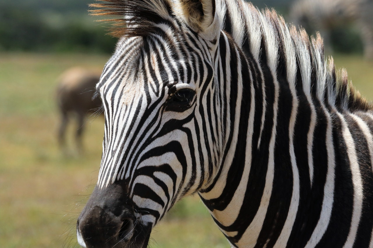 Takeaways from the NORD Rare Summit: Zebras Among Us Image